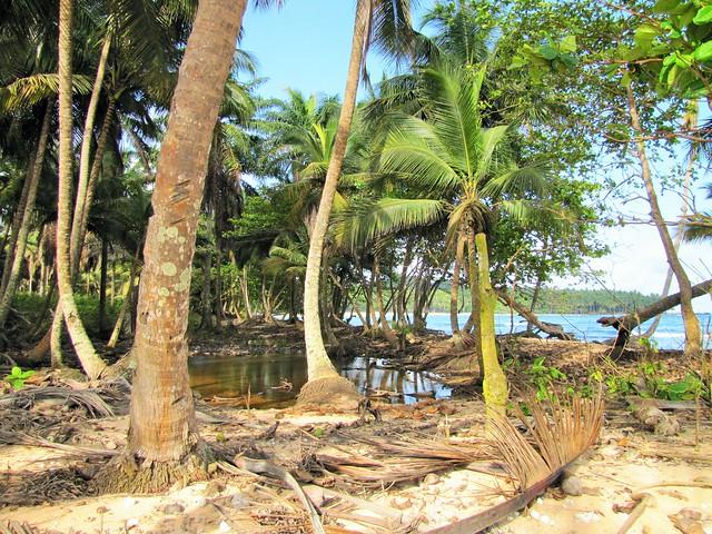 Sao Tome Praia Inhame 35