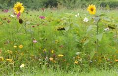 Scarpe side flowers