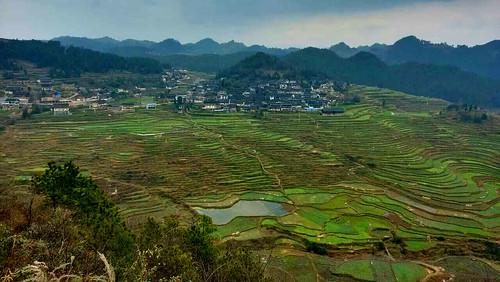 AnnikaGuizhou