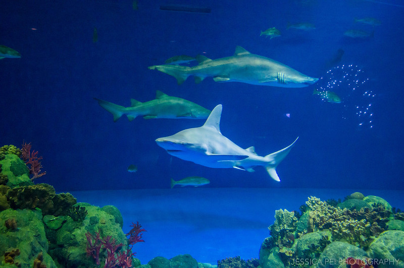 Sharks Exhibit Sea World San Antonio Texas