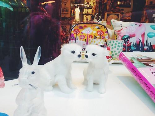 miniature arctic foxes