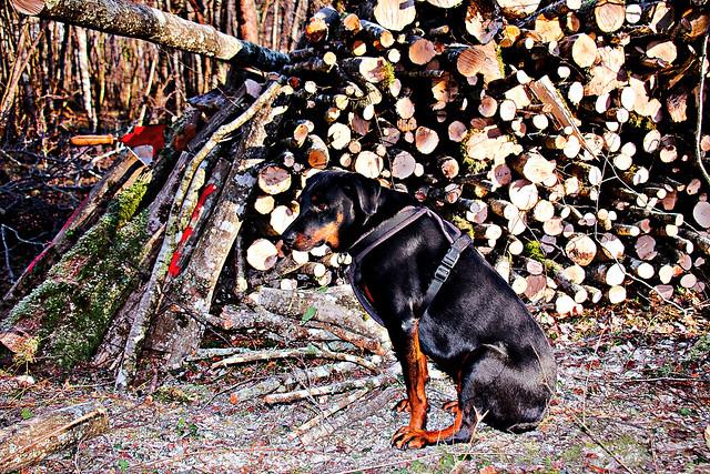 Aïka dans les bois