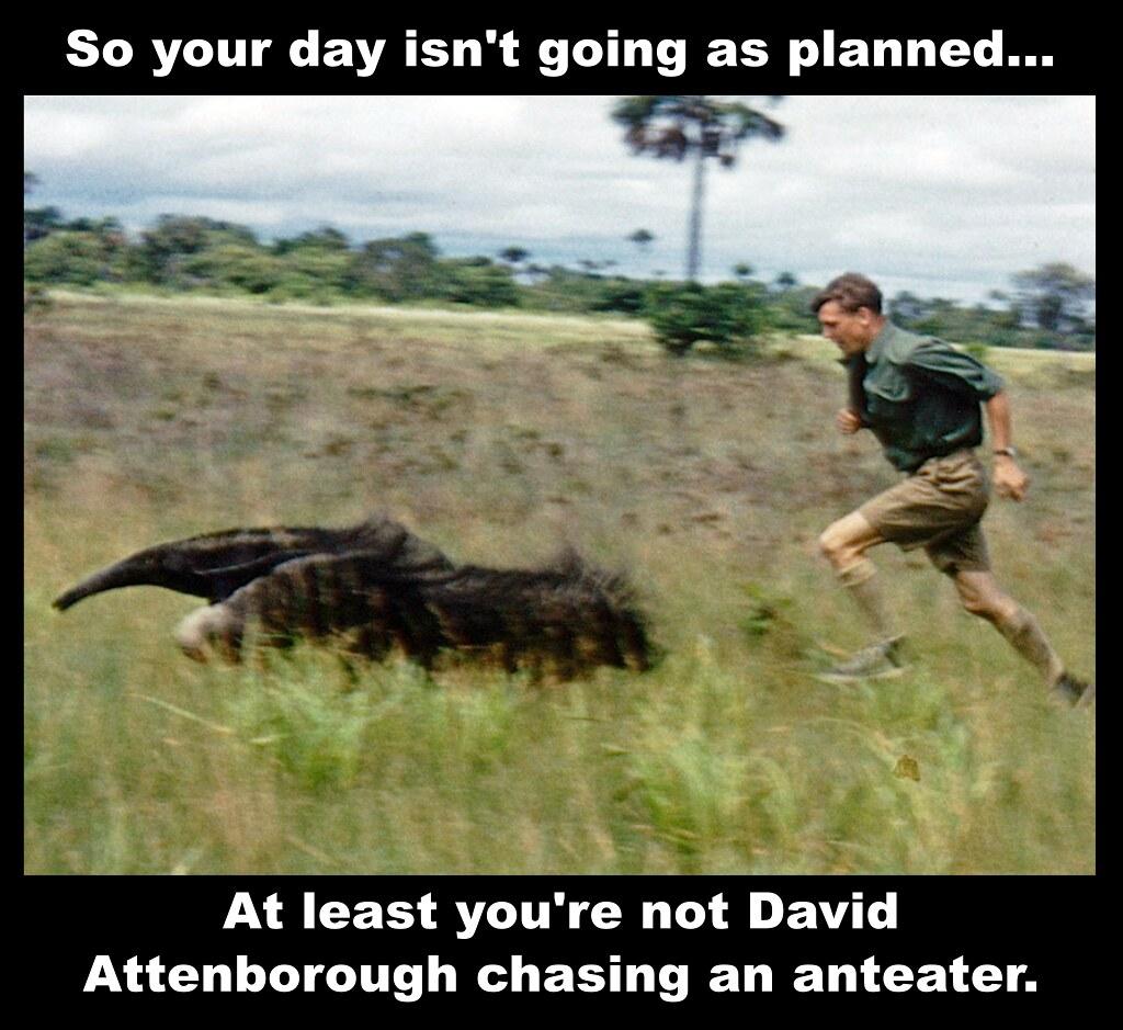 da-anteater