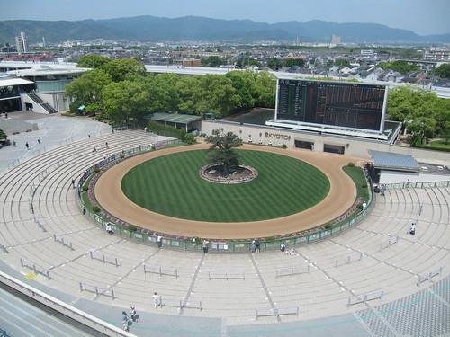 京都競馬場4階から見下ろしたパドック