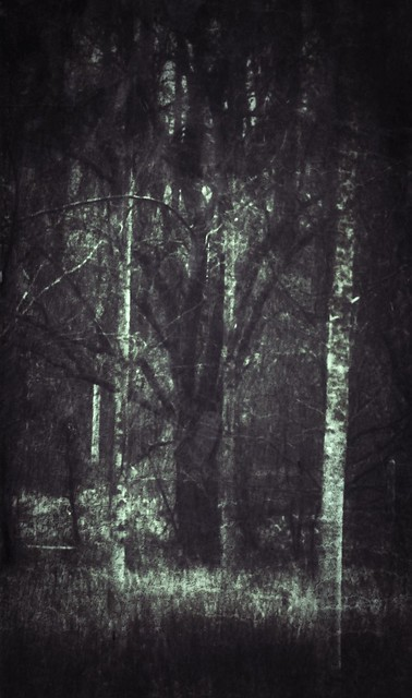 Darkest tree in the forest