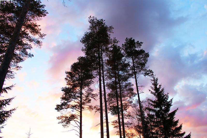 auringonlaskus blogi puut