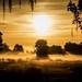 Sunrise in the Mist by Don Sullivan