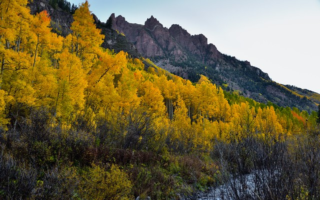Yellow Leaves of Aspens and a Backdrop of Sievers Mountain South