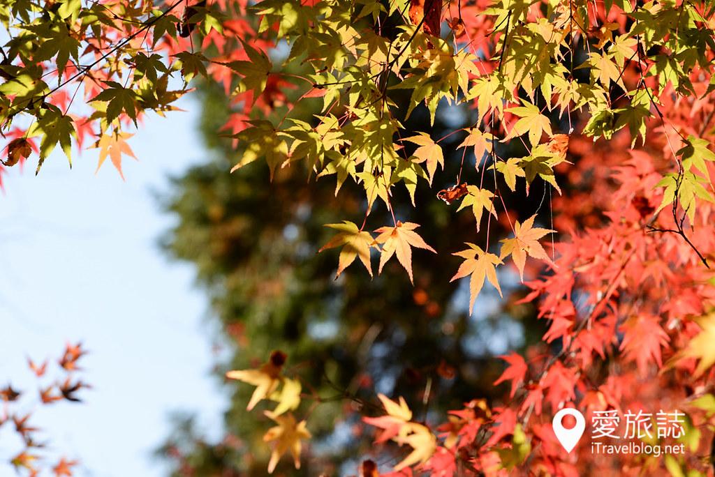 京都赏枫景点 高雄西明寺 29