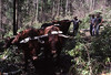 Peter Avery with timber cutters Bob Lockett & Reg Wade with Peter's bullock team at Garden Gully, Congewai, NSW, 8 December 1983