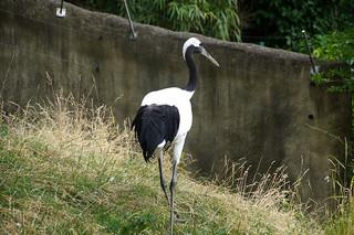094 Kraanvogel