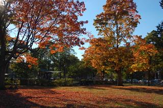 Cambridge Common, Harvard Square