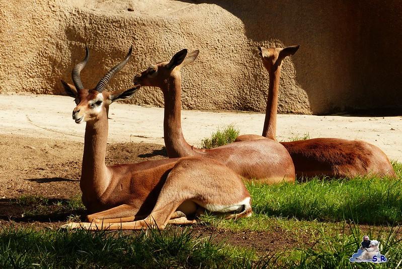 San Diego Zoo 10.11.2014 98