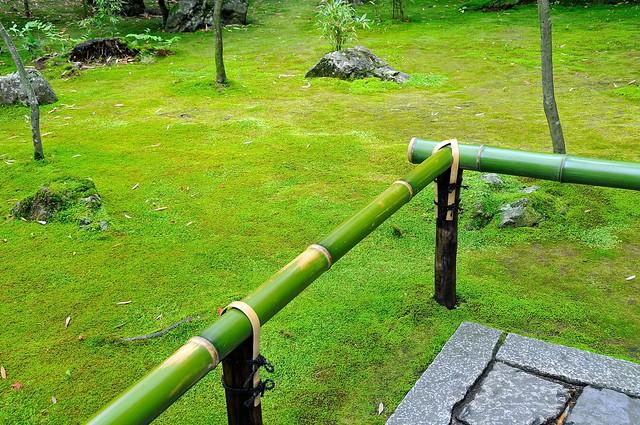 Verdant moss at Daitokuji