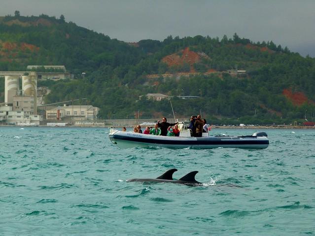 Avistamiento de delfines en el estuario del río Sado, Troia (Alentejo, Portugal)