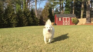 A little run by video. The fun part is after Chloè runs by. Hopefully it renders in slow motion for you guys.
