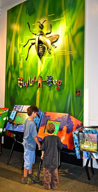 build a bug - Audubon Insectarium