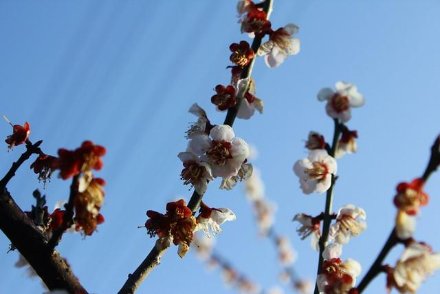 2014-03-16_00013_高松山