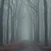 Hidden in the fog by Oli4.D