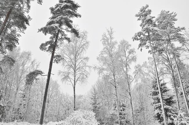 skogsbryn