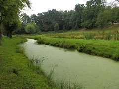 Green stream - Photo of Raucourt-au-Bois