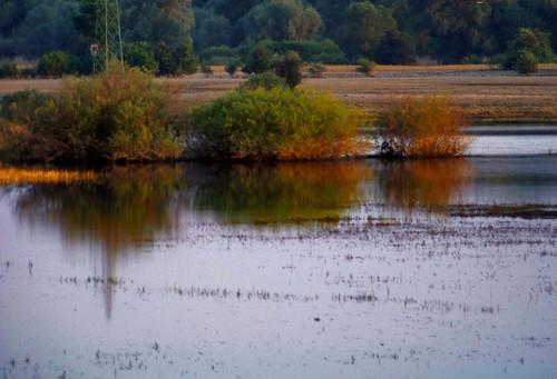 las trees sunset forest landscape bush poland polska backwater drzewa krajobraz krzew zmierzch światłocień rozlewisko chairscuro