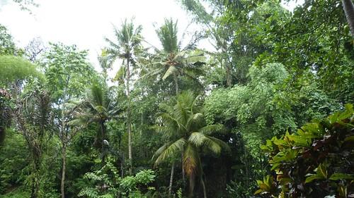 Bali-1-082