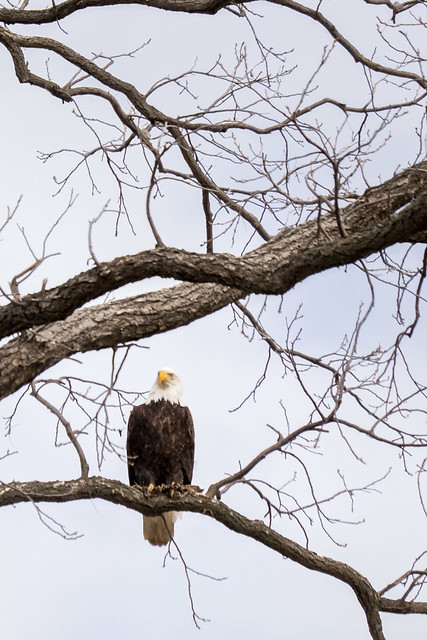 Eagles on the river 6