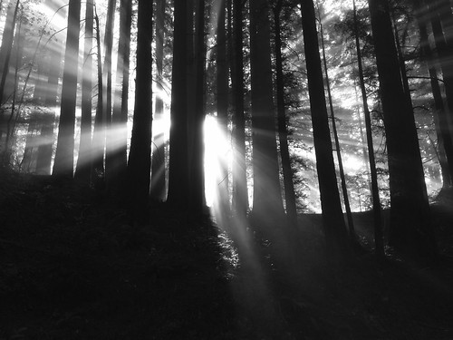 trees white black nature monochrome forest sunrise landscape mttam rays sunbeams iphone mttamalpais iphoneography iphone5s iphone5sbackcamera412mmf22