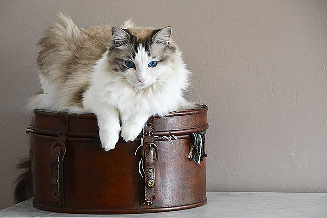 dur la vie de chat!!!! France_6685