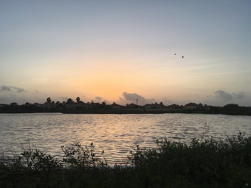 birds houses lake aruba sunrise