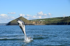Dolphin Survey trip October 2nd 2016