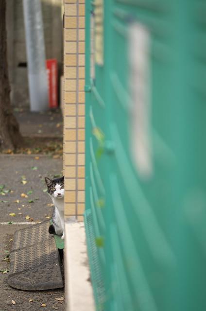 東京路地裏散歩 上野桜木のネコ 2014年11月3日
