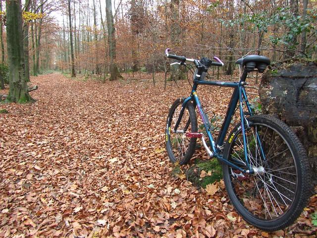 Das Waldrad