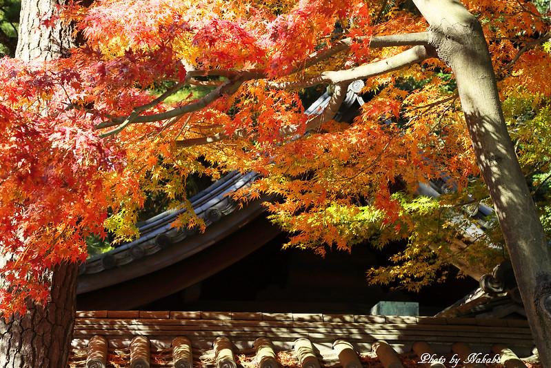 横浜三渓園 -紅葉2014- by Nakabo
