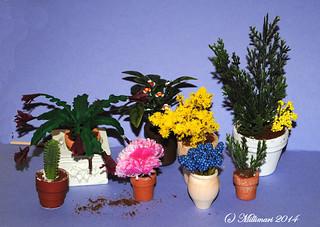 Kasveja kasvihuoneeseen