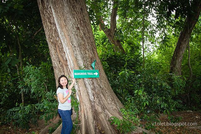 Mangrove Trail Lucy1-8660rw