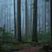Capilano Trees in the Fog-7248 by Geoffrey Shuen Photography