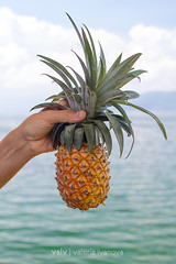 pineapple in a hand