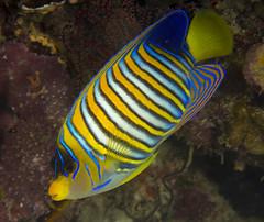 Aqua-Trek Dive | 2 November 2014