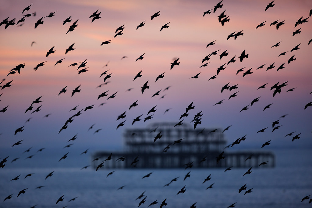 Dusky West Pier and Starlings