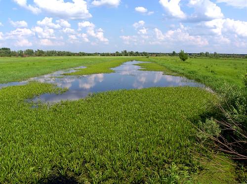 tomsk plants scapes wetland water landscape outdoor amateur samsung samsungpro815 pro815 salient floral plant flora