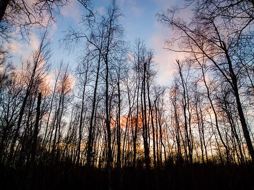 windows sunset sky sun silhouette mobile forest espoo finland photography nokia raw sundown 1020 metsä auringonlasku carlzeiss aurinko uusimaa dng lumia taivas pureview lumiagraphy lumia1020
