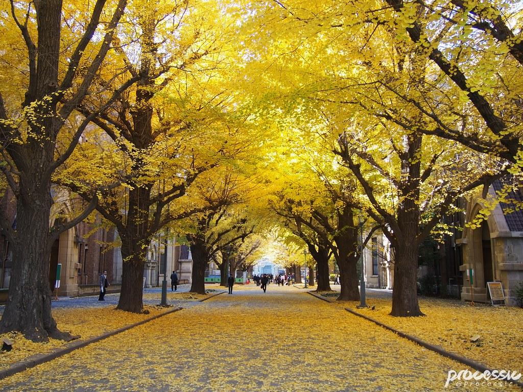 The University of Tokyo (Todai) TOKYO_0032