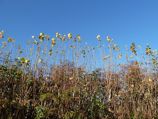 Hedgerow in Autumn (Eridge Circular)