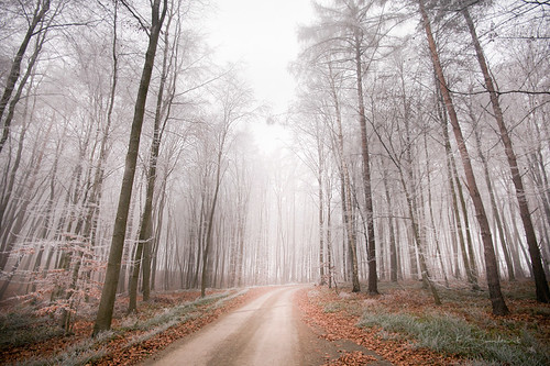 winter forest frost december poland