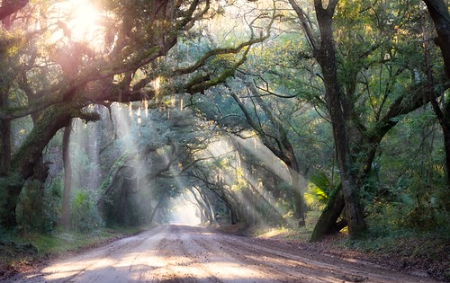 fog sunrise landscape woods glow forrest country southcarolina charleston southern dirtroad rays oaks botanybay countryroad sunbeams oaktrees edistoisland southeastern lowcountry carolinas edistobeach botanybayplantation