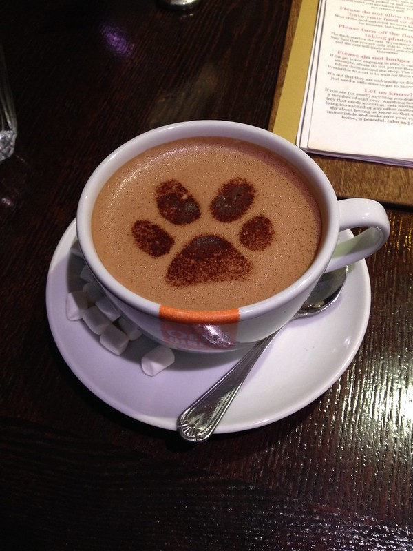 Inside Lady Dinah's - Cat Paw Hot Chocolate