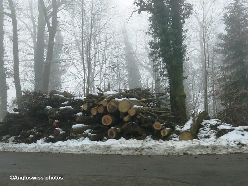 Logs Rüttenen-Solothurn