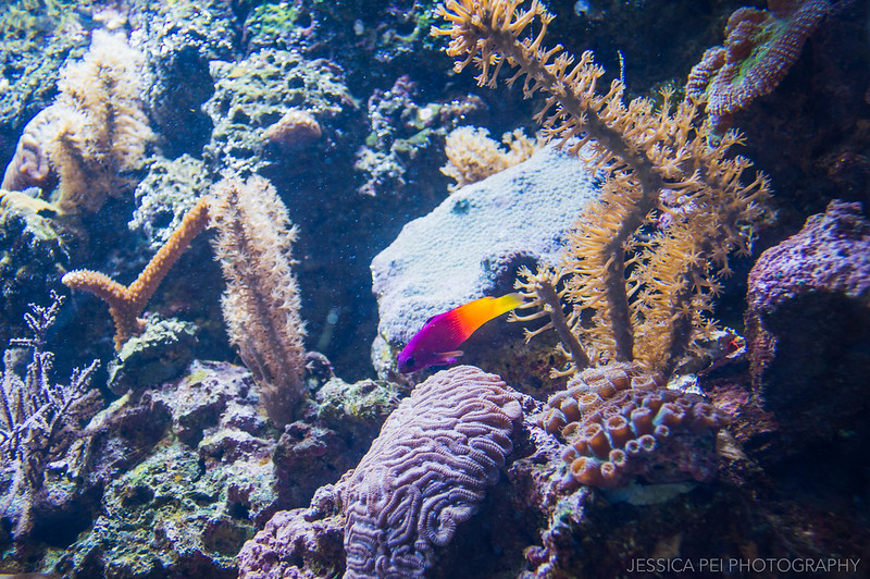 Coral Reef Fish Sea World San Antonio Texas